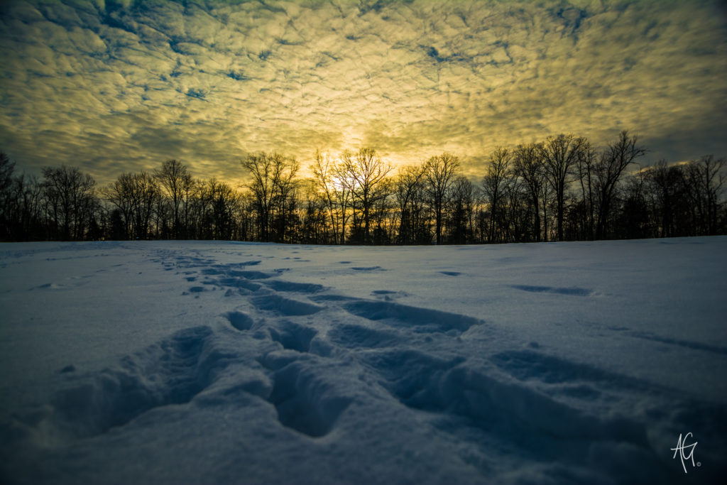 Snow covered field with sun setting behind trees in background