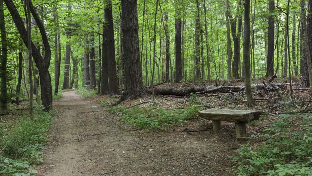 Family-friendly short treks through wooded areas | Amazing Hiking Trails You Have To See To Believe