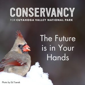 Conservancy Year End Campaign Donation Ask featuring a Cardinal Photo by Ed Toerek
