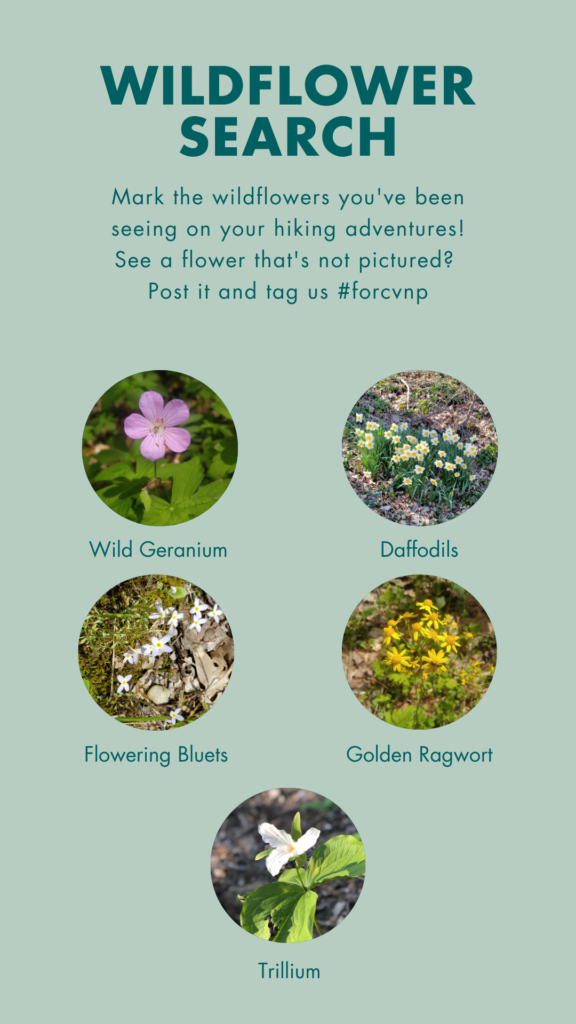 A wildflower search featuring trillium, wild geranium, daffodils, flowering bluets, and golden ragwort.