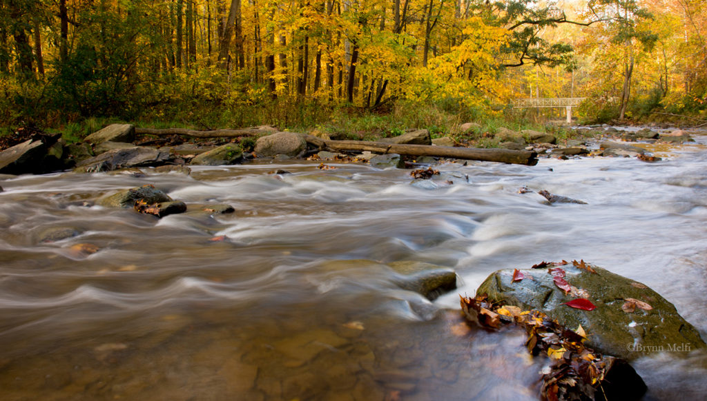 Water flows over rocks in the Cuyahoga River during autumn. Fallen leaves cover the rocks.