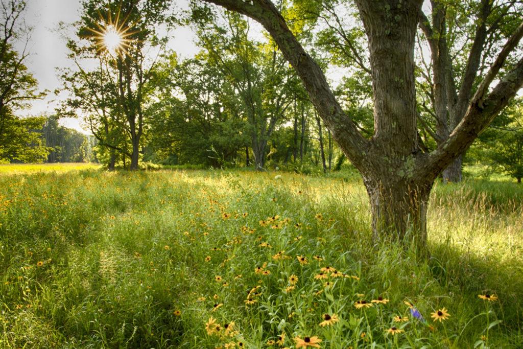 The sun shines down on a meadow of tall grasses and yellow flowers.