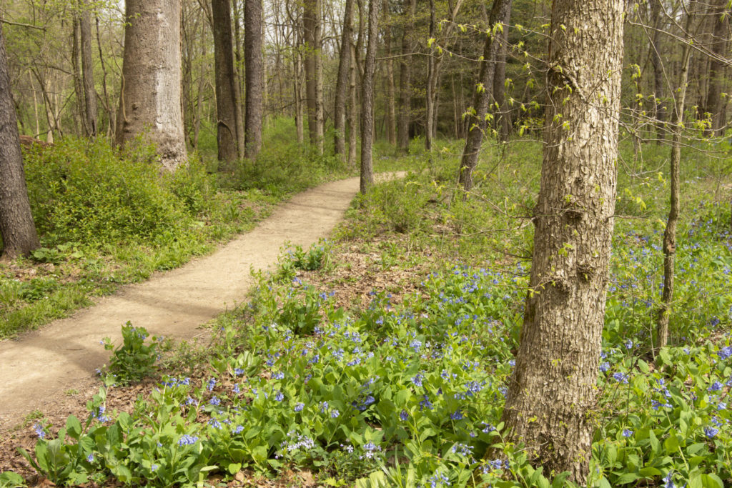 A small, dirt path cuts through a forest of trees and flowers.