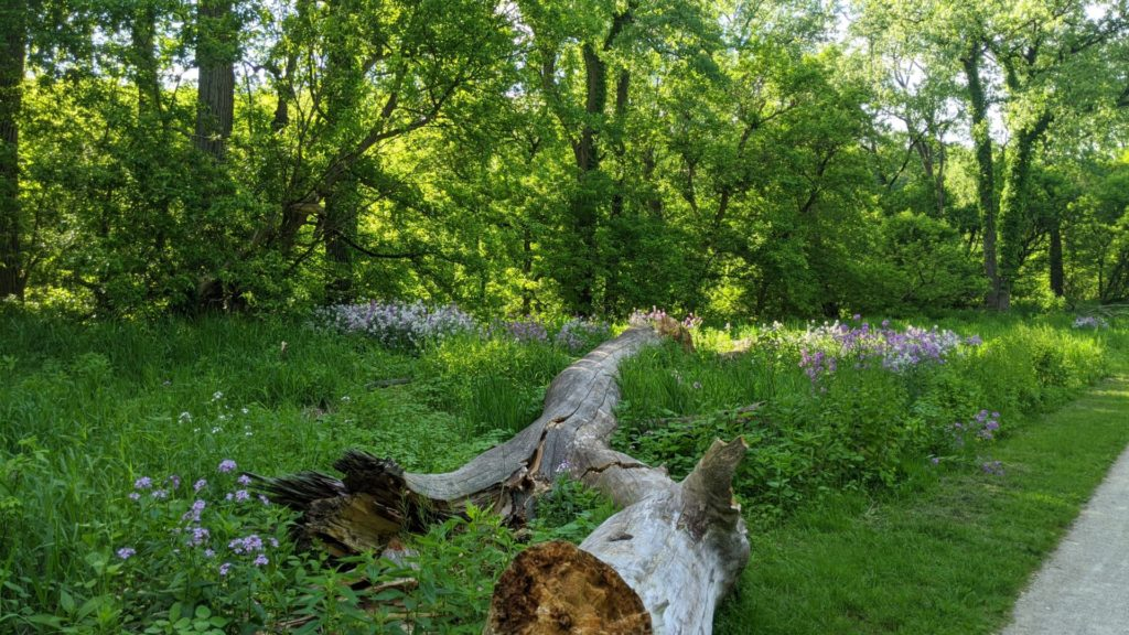A fallen tree lays in a field of grass and flowers in CVNP.