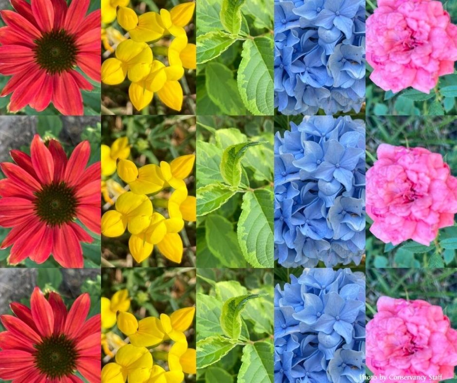 Pictures of plants in a repeating pattern.