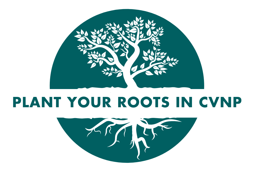 Plant Your Roots